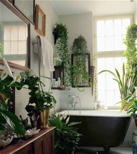 bathroom hanging plants bathroom plants culture scribe