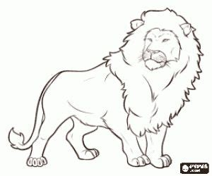 male lion coloring pages male lion lion and coloring on pinterest