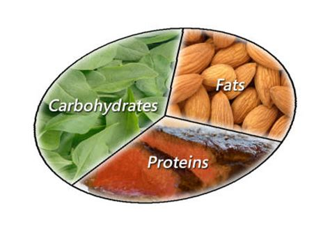 healthy fats proteins and carbs 29 nutrients carbohydrates fats and proteins