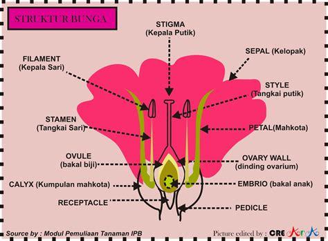 pengertian  contoh anatomi morfologi  fisiologi