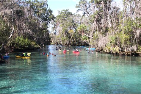 crystal river boat tours top 10 things to see do in crystal river florida