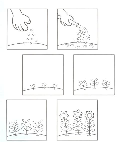 plants coloring pages preschool preschool plant life cycle coloring page coloring home