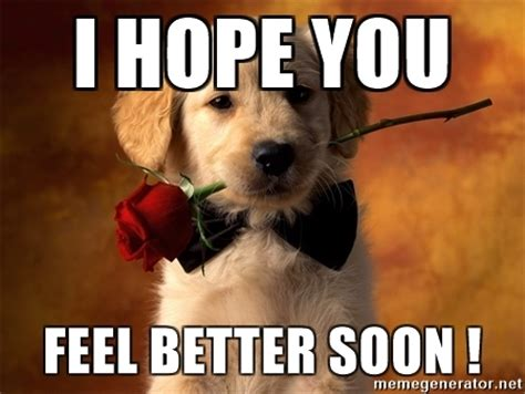 feel better puppy i you feel better soon with roses meme generator