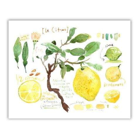 lemon kitchen decor 25 best ideas about lemon kitchen decor on pinterest
