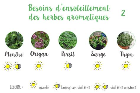 Herbes Aromatiques Cuisine Liste by Herbes Aromatiques Cuisine Liste Table Basse Relevable