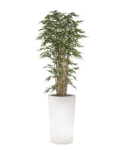 vaso pianta noleggio pianta bamb 249 ecologica e vaso x pot luminoso