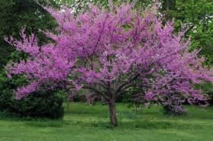 a to z the usa oklahoma state tree