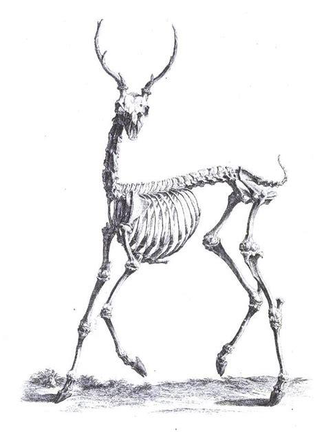 printable animal skeletons animal deer and related vintage printable at