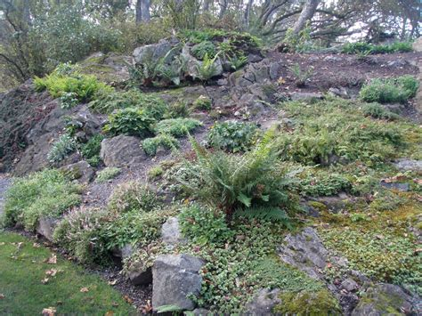 I Need A Cup Of Tea Revisiting British Columbian Rock Gardens Rock Garden