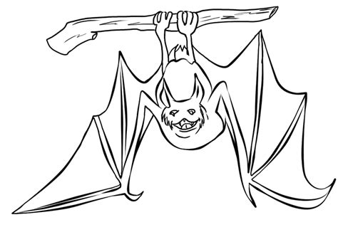 dibujos de murcielagos para dibujar maestra de primaria dibujos de animales salvajes para