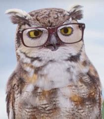 who voices the owl in americas best commercial voice of the owl americas best behind the voice actors
