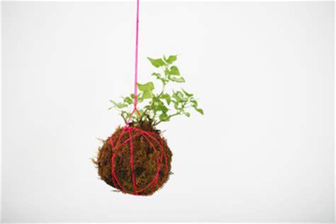 kokedama: make your own living moss balls