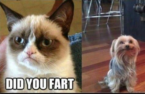 Cat Fart Meme - 251 best grumpy cat images on pinterest