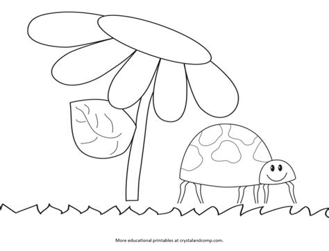 ladybug coloring pages for preschoolers kid color pages ladybug life cycle kids colouring