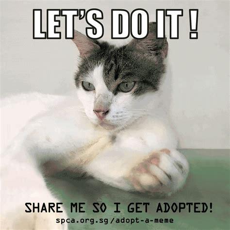 meme gif creative adoption caign adopt a meme is using real