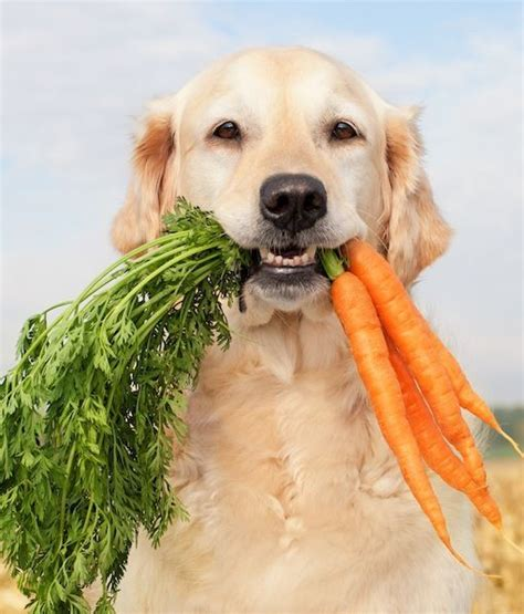 are carrots for dogs 10 ways to keep friends cool this summer bees