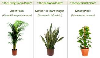 Best Plants For Office With No Windows Ideas The Best Indoor Plants For Your Home Office Get Fresh Air