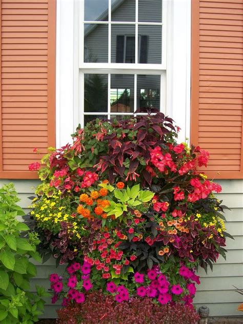 Container Trees For Patio by Container Plants Garden And Patio In The Garden