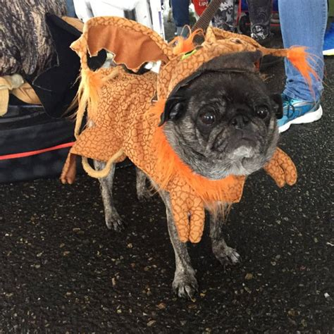pug costume wars pugs on parade in wars costumes is a thing that happened nerdist