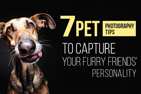 pet and photography for everybody secrets from a pro books 7 pet photography tips to capture your friends