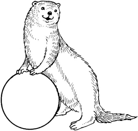 otter and a ball coloring page supercoloring com