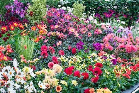 42 Best Images About Dahlia Gardens On Pinterest Gardens Dahlia Flower Garden