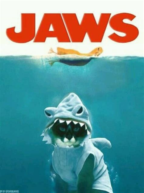 Jaws Meme - shark cat jaws poster parodies know your meme