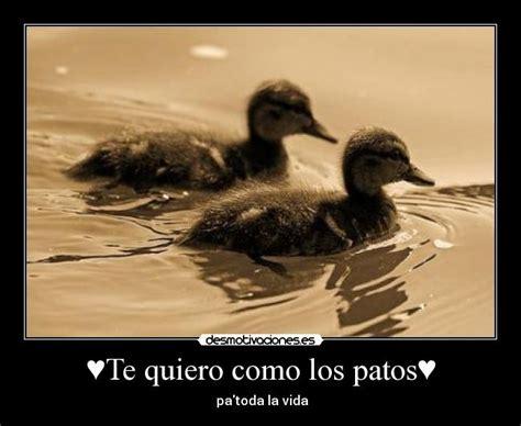 imagenes te quiero como los patos te quiero como los patos desmotivaciones