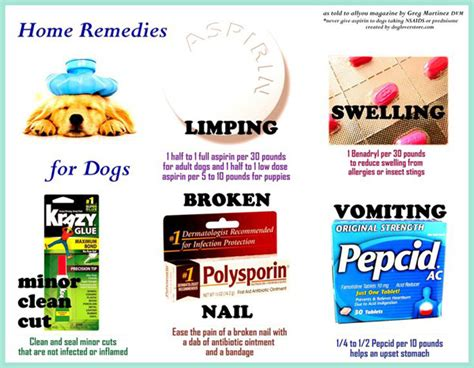 home remedies for dogs home remedies for dogs benadryl aspirin pepcid ac dogloverstore