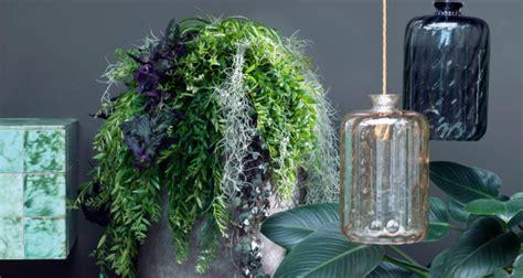 piante grasse pendenti con fiori piante pendenti da interni mignoloverde it