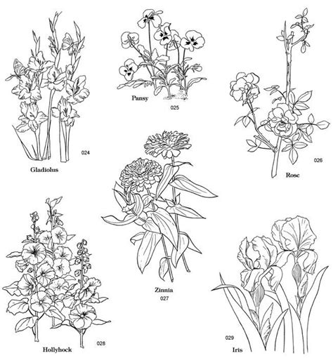 coloring pages zinnia zinnia line drawing www imgkid com the image kid has it