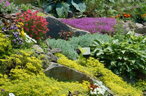 Rock Garden Plant Rock Garden Plants For Your Rockery Garden