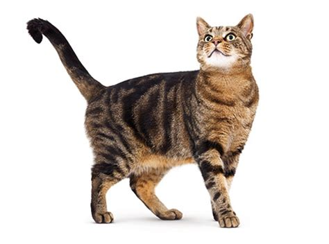 a cat find the best food for your cat s needs royal canin