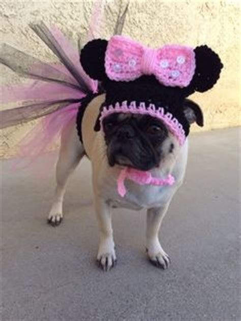pug in a tutu tutu on dresses pink and harness