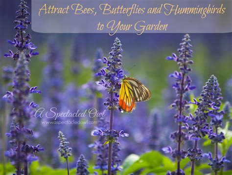 attracting butterflies and hummingbirds to your backyard attract bees butterflies and hummingbirds to your garden
