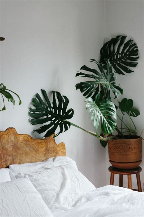 best plants for bedrooms 25 best ideas about bedroom plants on plants