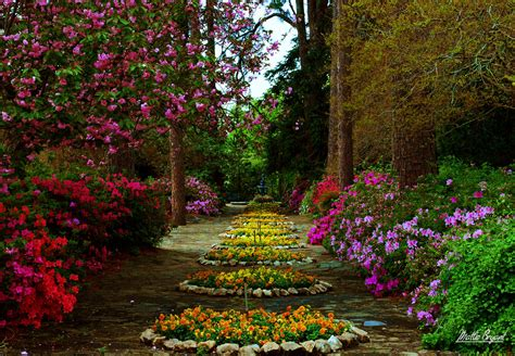 flowers gardens and landscapes flowers mattie bryant photography page 3