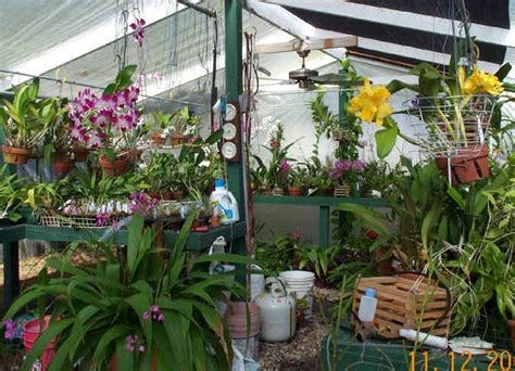 greenhouses in florida discover orchids greenhouse