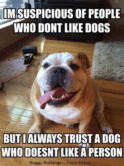 Bulldog Meme - 50 best old englisch bulldog s rule too images on