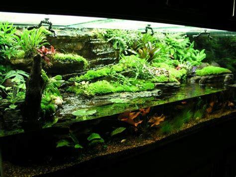 Aquascape Ideas Tropical 78 Best Images About Paludarium On Pinterest Orchid