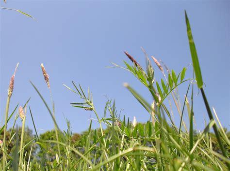 klimmzüge im liegen einfach mal im gras liegen und entspannen foto bild