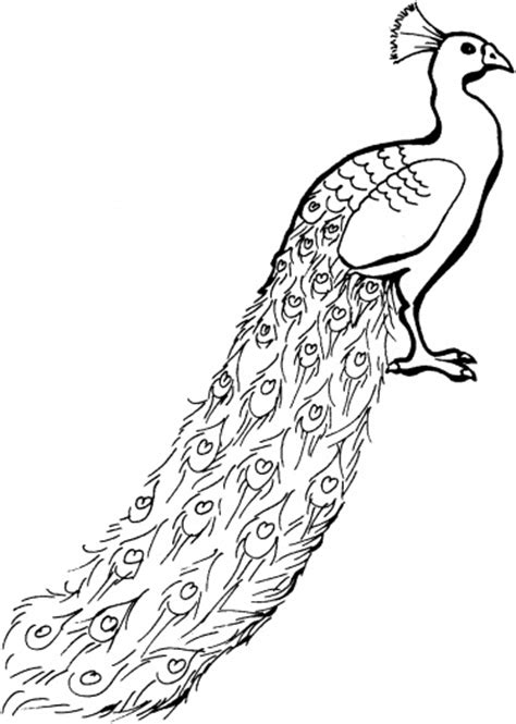 hard coloring pages of peacocks free coloring pages of hard peacock