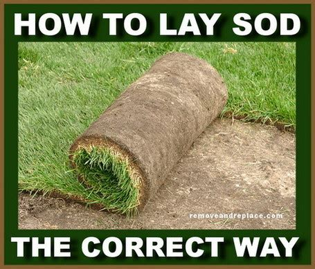 how to your to lay easiest way to prepare lay and plant sod in your yard removeandreplace