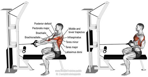 seated cable row back seated cable row exercise and