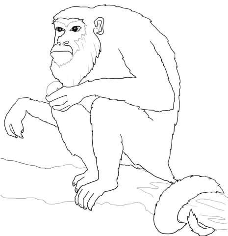 howler monkey coloring page howler monkey coloring pages freecoloring4u com