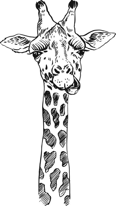 7 Amazing Animals To Colour In - Free Craft Project