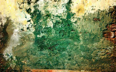 wallpaper for walls green wall brick green dirty plant grunge pattern hd wallpaper