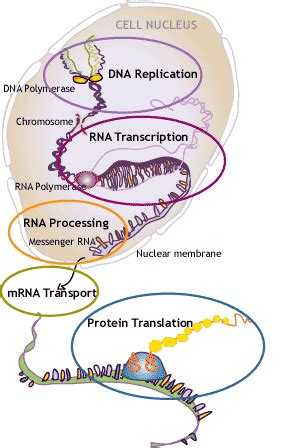 t protein 8 4 rna dna may 2012