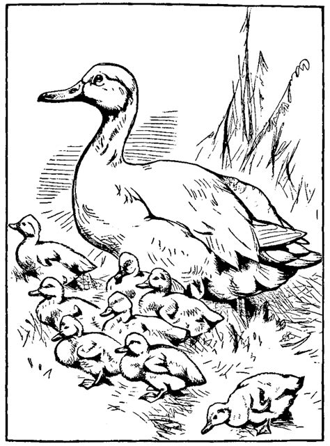 mother duck coloring page printable mother duck and baby ducklings coloring page