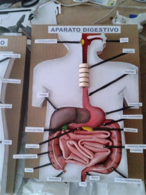 imagenes de partes del cuerpo con material reciclado maquetas dibujos y dise 209 os aparato digestivo maqueta